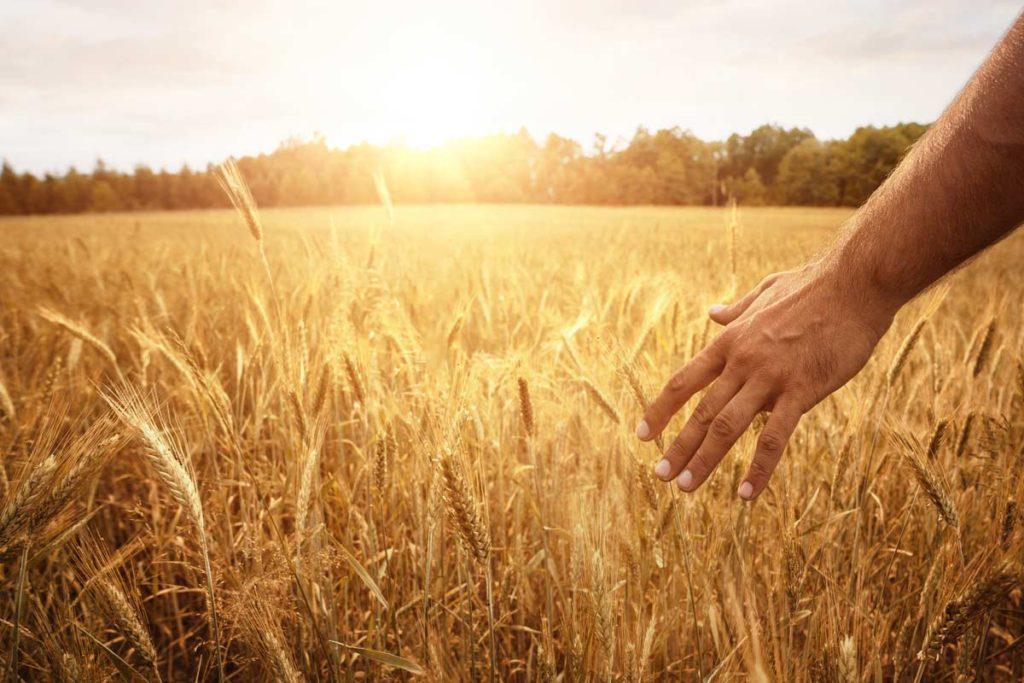 gpl e agricoltura
